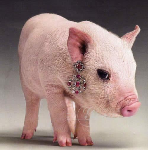 敲乳猪这可爱的样子,你是否被逗乐了呢.