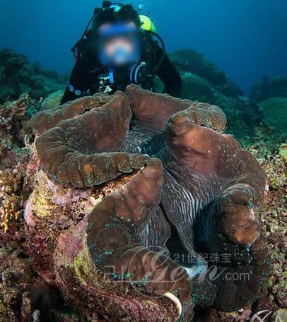 看出砗磲曾经是我国南海珊瑚礁海域的优势生物品种